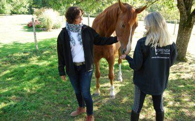 Was zeichnet den Einsatz von Pferden in Coachings und Trainings aus?