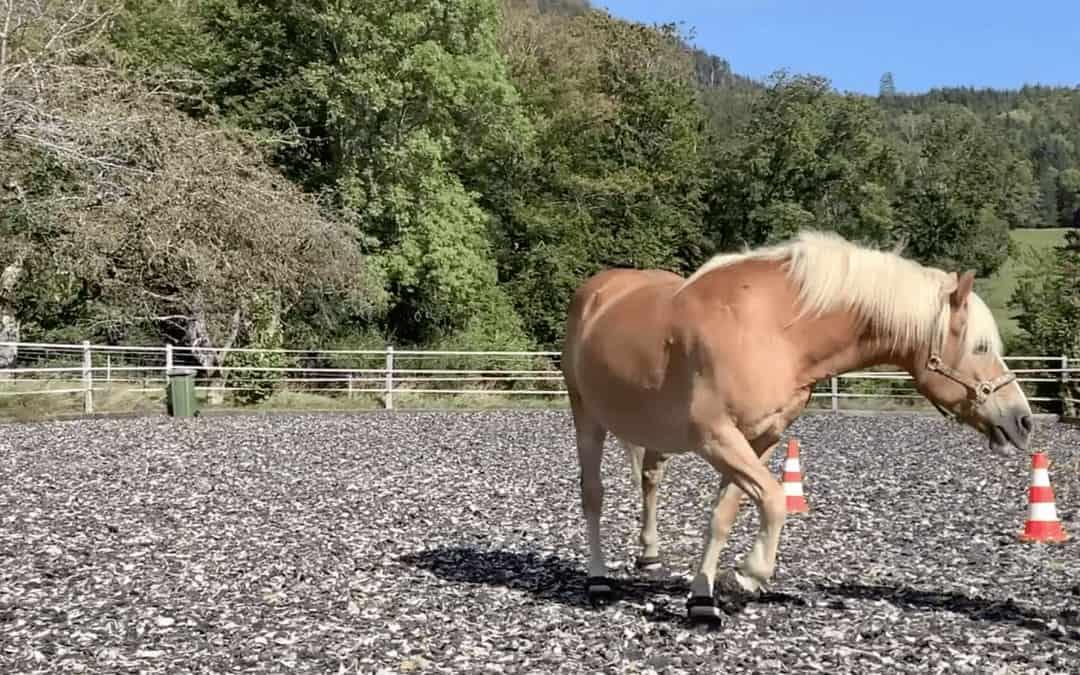 3 Erkenntnisse aus einem unserer Führungskräfte-Coachings mit Pferden